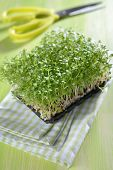 Garden cress on a table