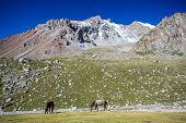 stock photo of shan  - Two pasturing horses at sunny day in high snowy mountains - JPG