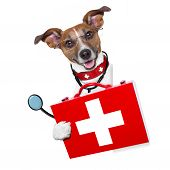 stock photo of jack-in-the-box  - medical doctor dog beside a blank banner - JPG