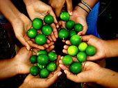 image of obra  - Limes produced on the coast of Oaxaca with working hands - JPG