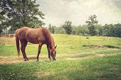 Chestnut Horse In Rural Setting Textured Landscape