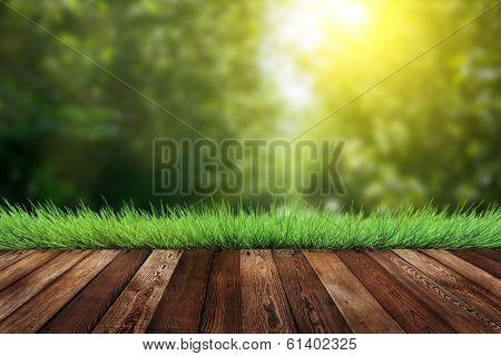 Summer Garden Background