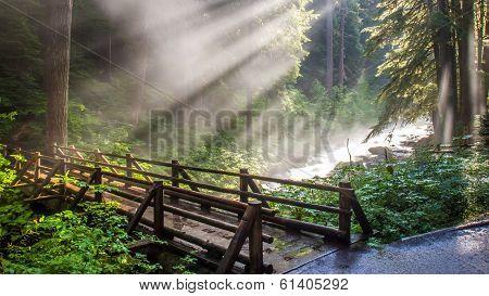 Sunlight through the steam