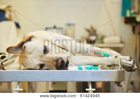 Ill Dog