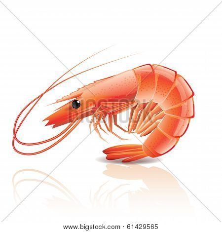 Cooked Shrimp Isolated On White