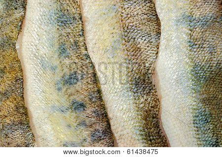 several defrosted merluccius as skin background texture