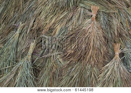 Dried Sugar Cane Background