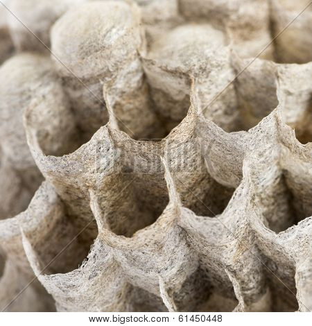 Close-up of a dry vespiary's cells, isolated on white