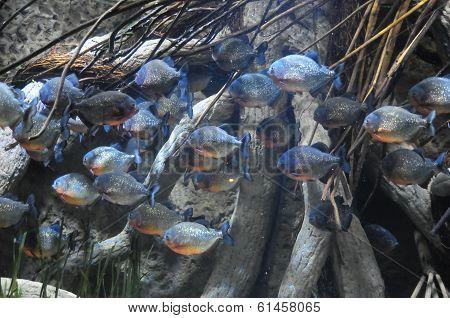 Fishes in a Tropical Acquarium