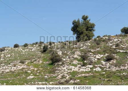 Lonely tree on the of the mediterranean hill
