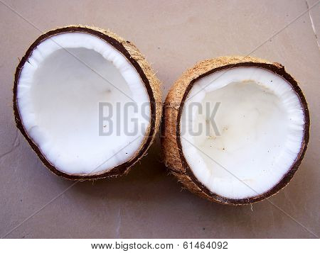 coconut palm drupe or fruit depicting the white fleshy part used in cooking
