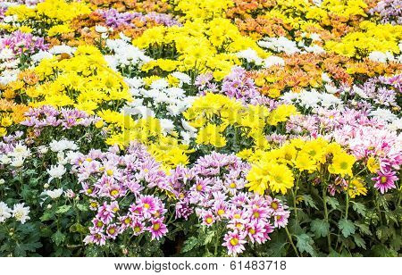 A Group Of Brightly Color Flower