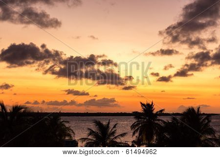 Palmtrees at sunset