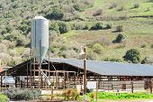 stock photo of feedlot  - Rustic cowshed with silo in the countryside aginst spring blossoming hill - JPG