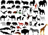 stock photo of platypus  - collection of various wild animals vector silhouettes - JPG