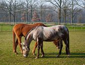 stock photo of horses eating  - free horse bareback while eating fresh grass - JPG