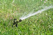 Sprinkler Watering In Garden