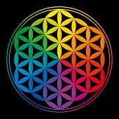 stock photo of symmetrical  - Flower Of Life with rainbow colors - JPG