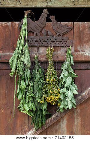 Medical herbs