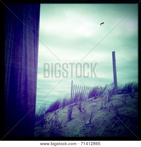 Instagram filtered image of sand dunes and a bird in filght