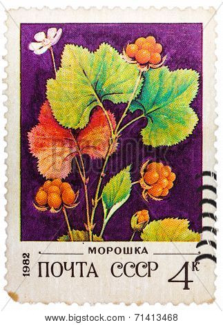 Post Stamp Printed In Ussr (cccp, Soviet Union) Shows Image Of Blackberries