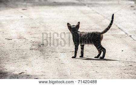 Stray Kitty On The Cement Floor