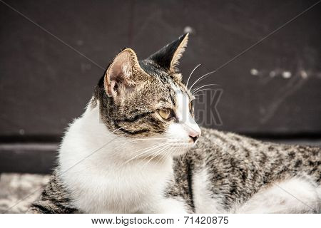 Close Up Looking Face Of Stray Cat