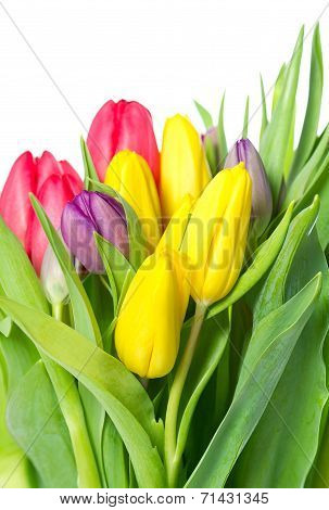 Bouquet Of Fresh Spring Tulip Flowers