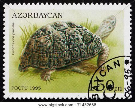 Postage Stamp Azerbaijan 1995 Leopard Tortoise