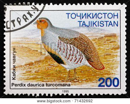 Postage Stamp Tajikistan 1996 Daurian Partridge, Gamebird