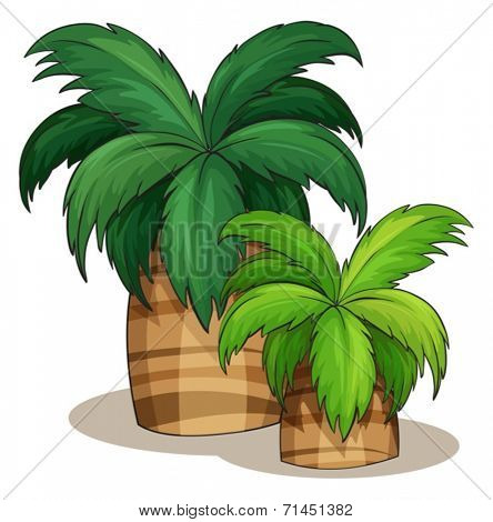 Illustration of two palm tress