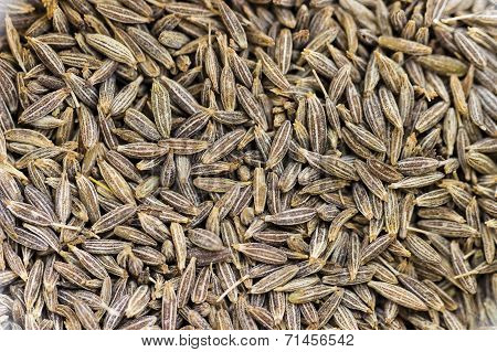 Closeup macro image of cumin seeds also called Jeera in India