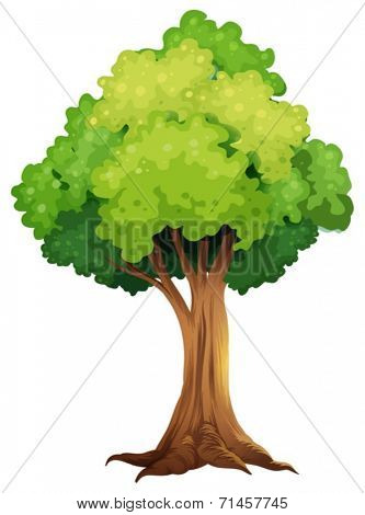 Illustration of a giant tree on a white background