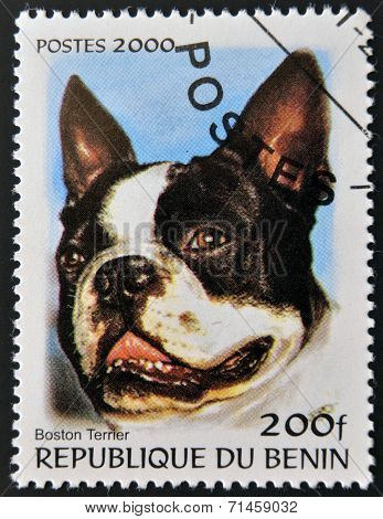 BENIN - CIRCA 2000: A stamp printed in Benin shows a dog Boston Terrier circa 2000