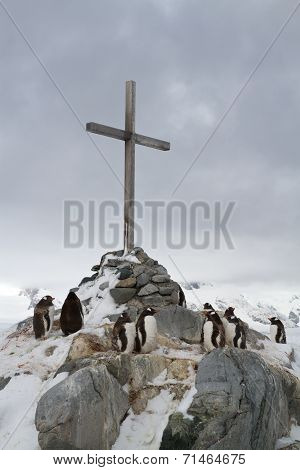 Memorial Cross At The Site Where The British Wintering And Gentoo Penguins