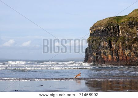 Blur Motion Of Dog Running In Sea By Cliffs