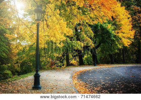 Curvy Road In Autumn Park