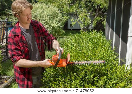 Hedging Bushes