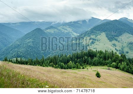 Foggy Morning Landscape With Pine Tree Highland Forest At Carpathian Mountains. Ukraine Destinations