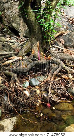 Small Religious Altar With Burning Candles And Incense Aroma Sticks Offerings In Banyan Tree Roots