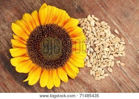 Sunflowers and peeled seeds on wooden background