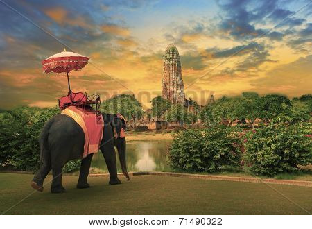 elephant dressing with thai kingdom tradition accessories standing in front of old pagoda in Ayuthay
