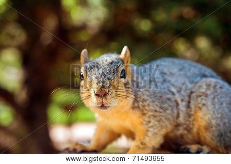 Squirrel Closeup