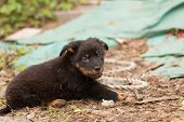 foto of stray dog  - Cute black stray dog puppy looking to camera - JPG