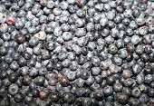 Постер, плакат: Fresh blueberries background