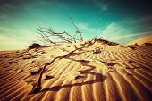 stock photo of dead plant  - Desert landscape with dead plants in sand dunes under sunny sky - JPG