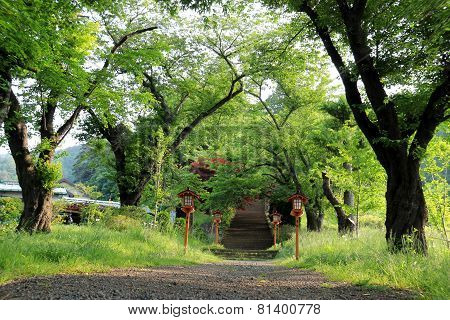 Walkway To Chureito Pagoda, Arakura Sengen Shrine In Japan