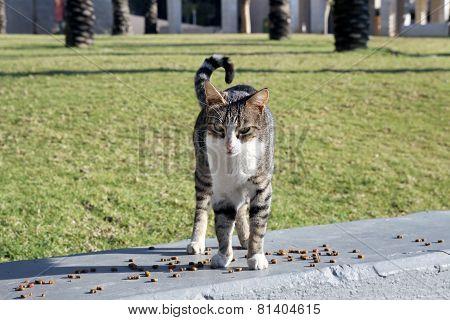 Feeding The Homeless Cats