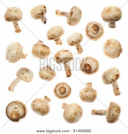 Set of champignon mushrooms