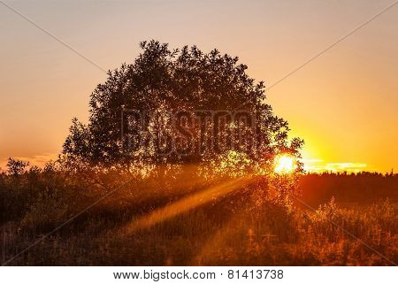 Landscape with coloful sunset in summer field